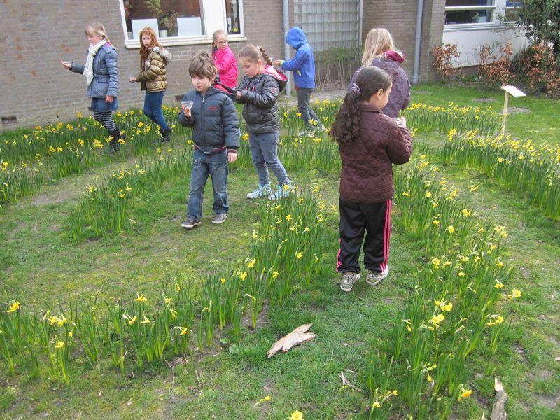 Narcissen labyrint op groene schoolplein van Apollo Leiden