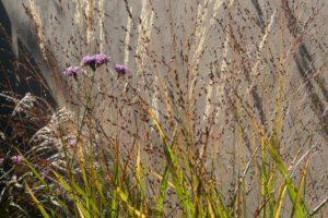 Gras tegen muur
